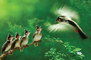 birds closeup